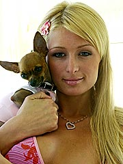Paris's Prized Pooch Tinkerbell Found
