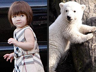 Knut: Coming to Theaters and Voiced by Suri Cruise?