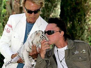 Siegfried & Roy Take Stage with Attack Tiger