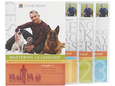 Calm, Assertive Training DVD