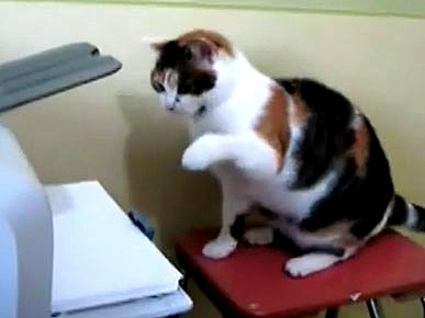 Cat Attacks Annoying Printer