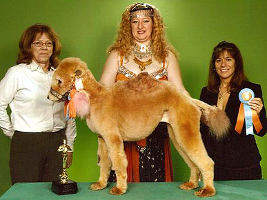 Dog Grooming Gone Wild!