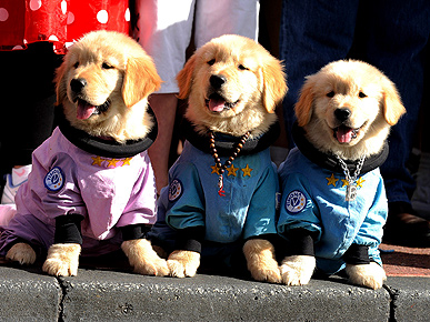 Space Puppies Invade Parade!