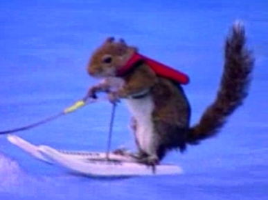 Meet Twiggy the Water-Skiing Squirrel!