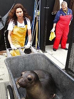 Minnie Driver's Passion: Marine Wildlife