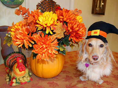 Show Us Your Thanksgiving Pet Pilgrims!