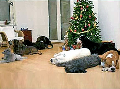 New You Tube Hit: Doggies Decorate For Christmas!