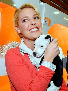 Katherine heigl s foundation saves the lives of 25 chihuahuas