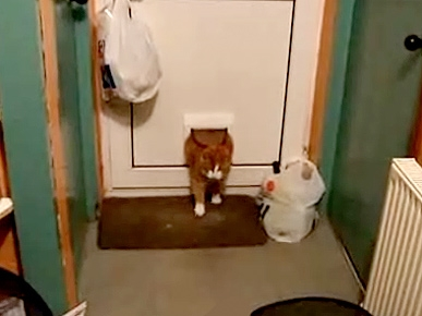 Tuesday's Funny Video: Fat Cat vs Cat Flap