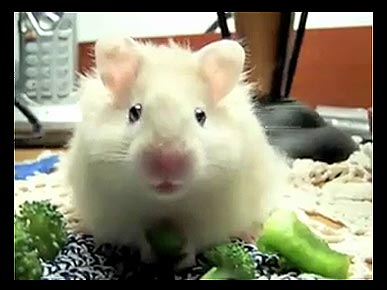 Monday's Funny Pet Video: The Nom Nom Song!