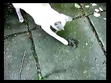 Tuesday's Funny Pet Video: A Screaming Frog