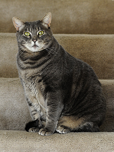'Sassiest Tabby' Wins Romeo the Cat's Furball Contest