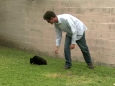 Monday's Funny Video: The Biggest Loser Cat Version!