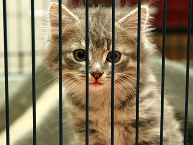 7 Reasons to Adopt a Cat Now!