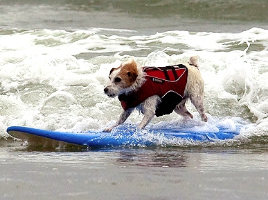 Cowabunga! Dogs Hang Ten at San Diego Surfing Contest