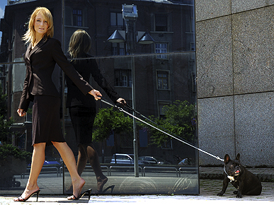 7 Doggie Don'ts for Take Your Dog to Work Day