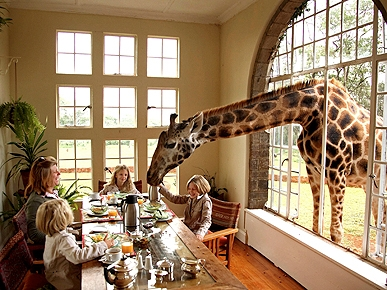 Hotel Caters to Guests – and Giraffes!