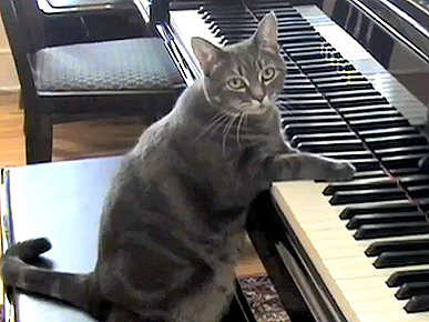 Tuesday's Funny Video: Orchestra's Special Guest: Nora the Piano-Playing Cat!