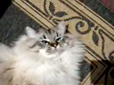 Friday&#39;s Funny Video: This Kitty&#39;s a Dancing Queen!