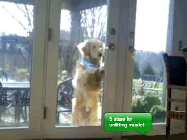 Wednesday's Funny Video: Doggy Door Not Required!