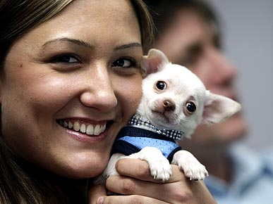 Grand Theft Puppy! Woman Tries to Snatch Chihuahua at Gunpoint