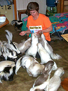 Skunks As Pets? Ohio Woman Says Yes, Indeed!