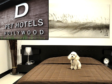 REVIEW: What Recession? Dogs Live in Luxury at Hollywood's D Pet Hotels