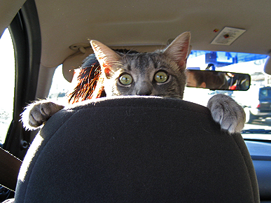 Caption Contest: What's This Cat Doing in the Driver's Seat?