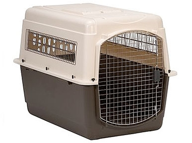 REVIEW: Book a First-Class Carrier for Your Pet!