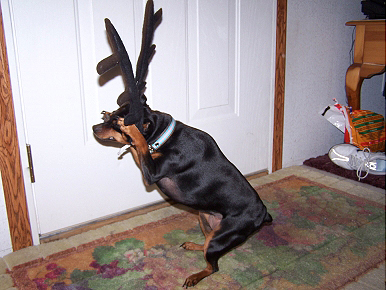 Caption Contest: Sasha the 'Reindeer' Is Ready for Takeoff!