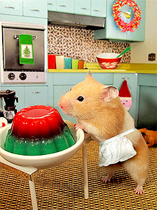 Holiday Hamster! Little Edie Poses with Jell-O Mold