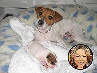 PHOTO: Mariah Carey's New Puppy