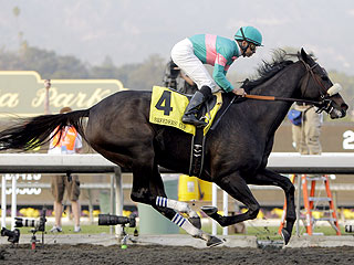 Zenyatta Breeders Cup 2010 Star