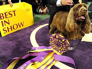 Announcer For Westminster Dog Show