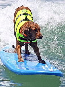 Ricochet the Surfing Dog Raises Thousands of Dollars for People in Need