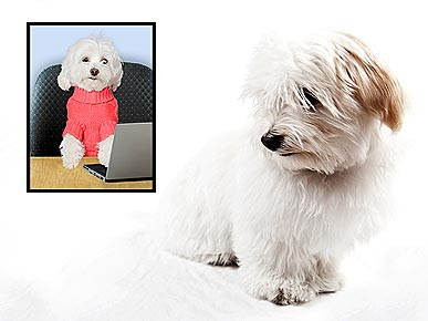 Ask Ethel: Frightened Havanese Pees Non-Stop
