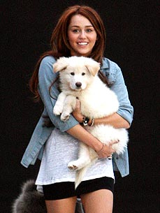 New Dog Alert: Miley Cyrus Welcomes Pup Mate
