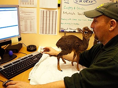 Abandoned Lil' Antelope Charms Staff at U.K. Zoo