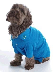 Check Out the Oprah Store's New Playful Pet Gear