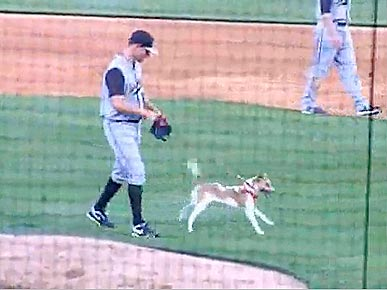 Wednesday's Funny Video: Dog Storms Baseball Field – and Poops!
