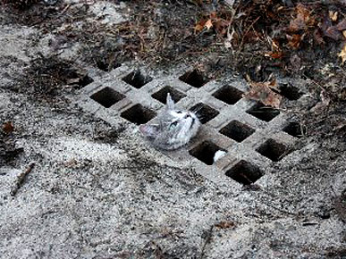 Mischievous Cat Gets Herself Stuck in a Storm Drain