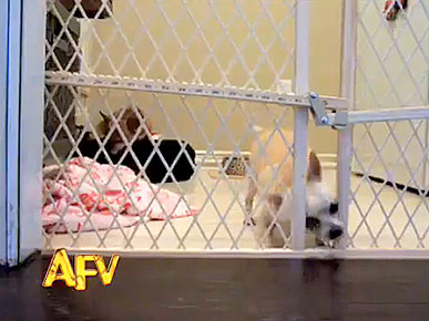 Wednesday's Funny Video: Chihuahua Gets Himself Out of a (Door) Jam