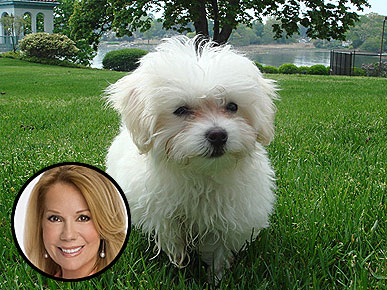 Kathie Lee Gifford's New Pup Is a 3-Lb. Tough Guy