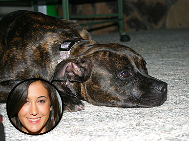 Dog that Bit Vanessa Carlton Is Spared Euthanasia, for Now