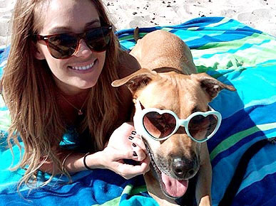 Lauren Conrad's Dog Eats Costumes, Not Candy on Halloween