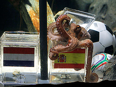Paul the 'Psychic' Octopus Predicts Spain to Win World Cup