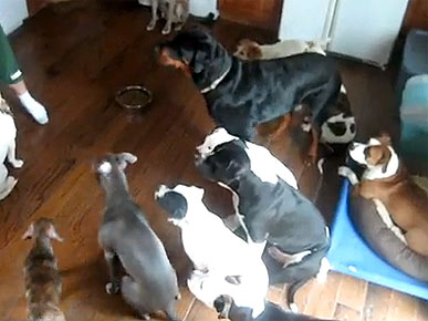 Monday&#39;s Funny Video: How to Feed a Pack of Dogs
