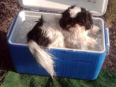 Caption Contest: Oakley the Dog Cools Down with Ice