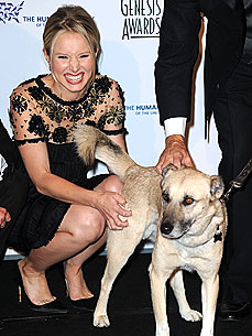 Kristen Bell's Pet Project: Raising Funds for Special Needs Animals