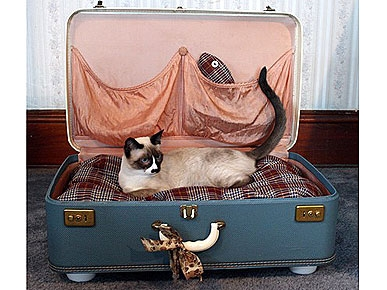 Etsy Fave! Suitcase Pet Beds Packed with Retro Style